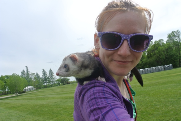 Domesticated ferrets can be very social and all around awesome