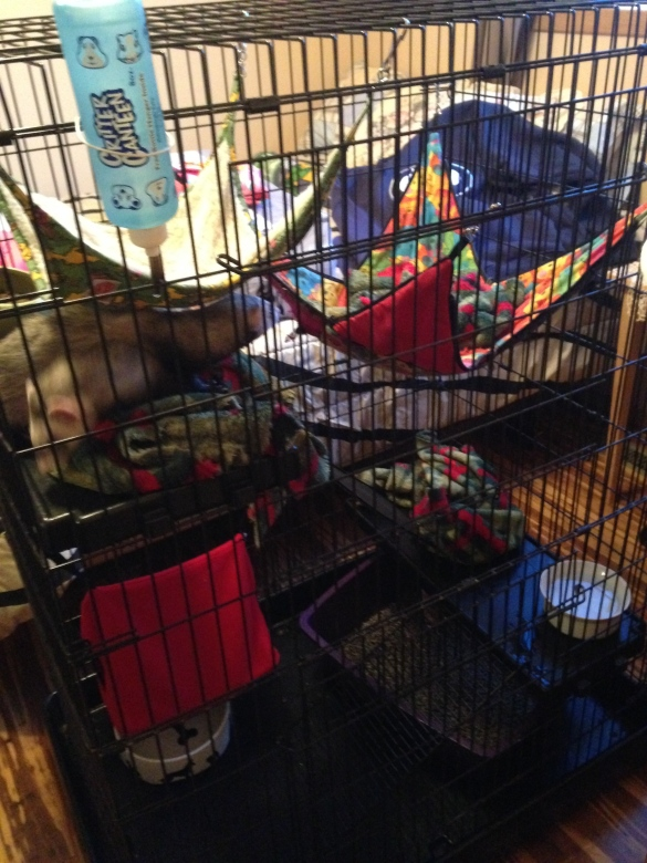 This cage is large enough to have multiple water dishes - and because the bottom is so large a water on one side and litter box on the other is okay