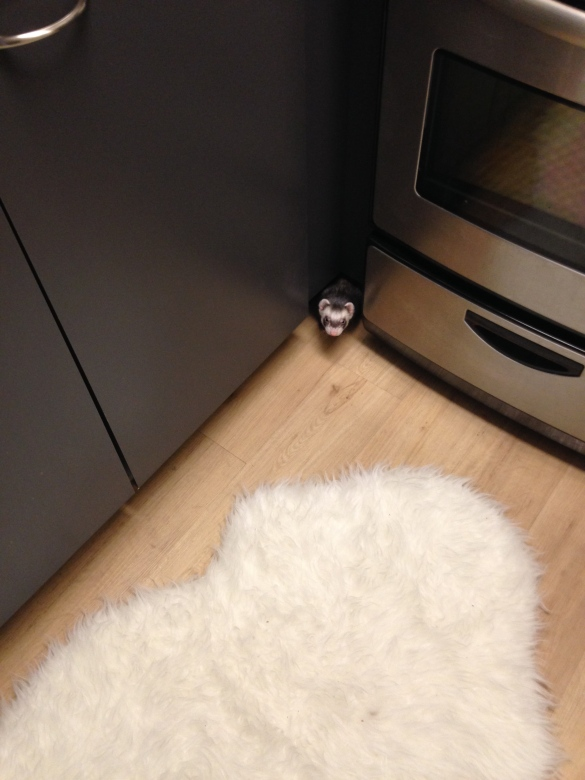 Turnip made a home in a hole under the cupboard