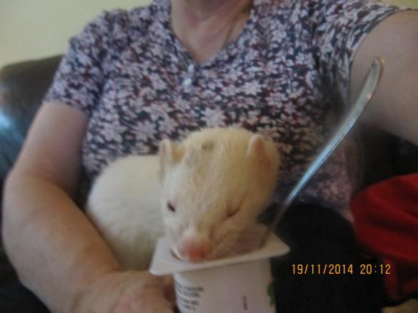 I'm eating Mommy's yogurt! Yummy