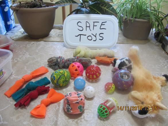 assortment of safe toys