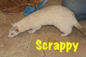 This is Scrappy before her injury