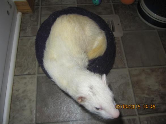 Jocko slithering off his bed after Mommy poked him awake!