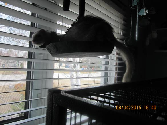 Luna swinging on my outdoor wind chime in front of the window in the shelter room