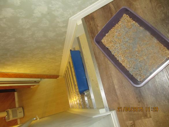 the 2 litter boxes at the top of the stairs and the lip of the spilled box 2 steps down!
