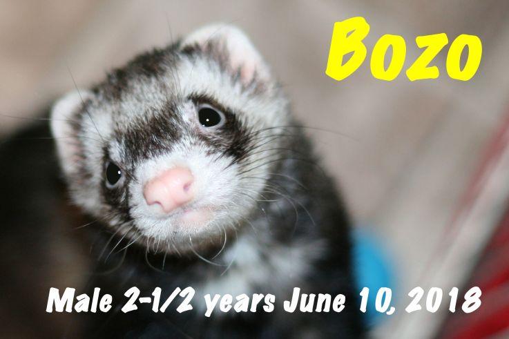 Bozo for website