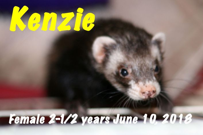Kenzie for website